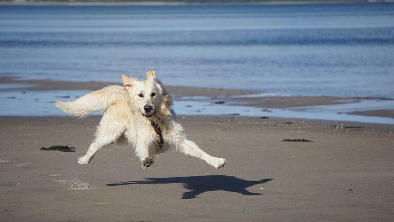 Portare il cane al mare, i consigli del dott. Pivetta