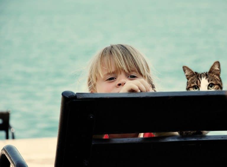 Organizzare la vacanza con il cane o il gatto
